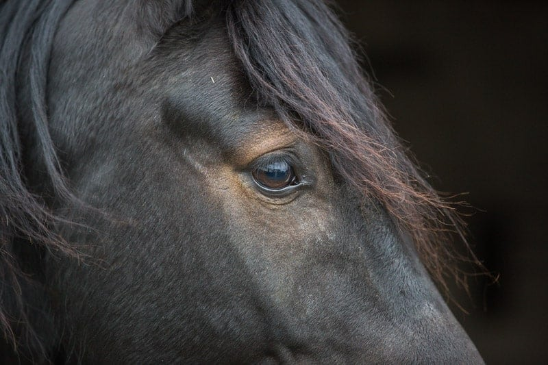 equine portrait photographer wiltshire hampshire