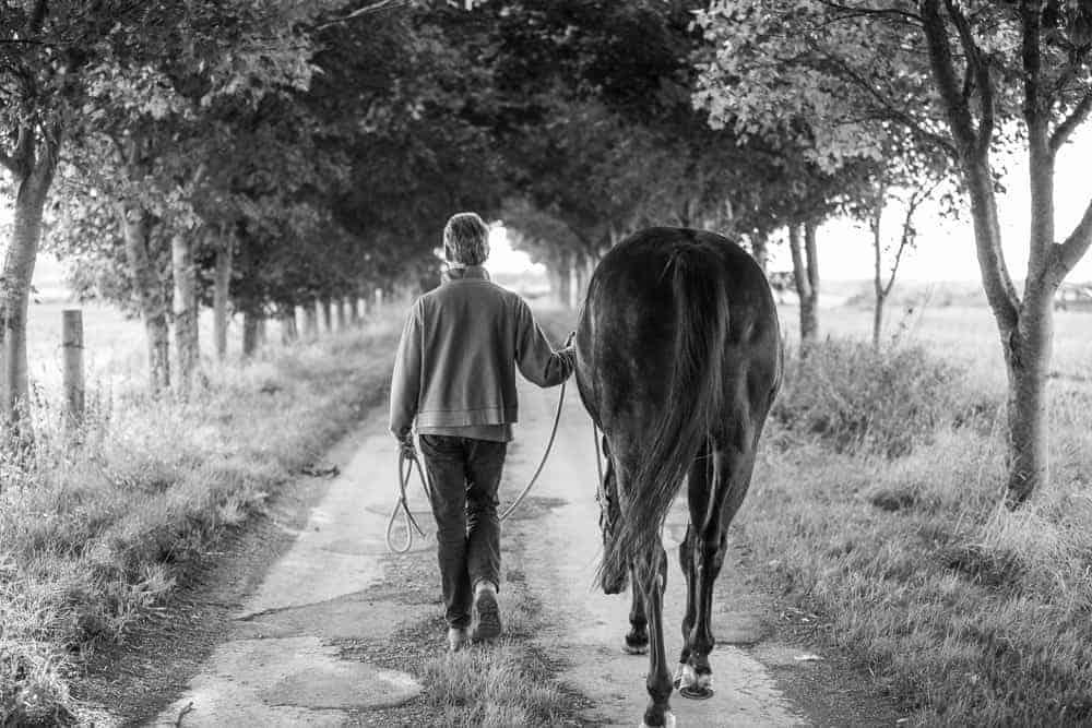 Equine Photo Shoot Wiltshire