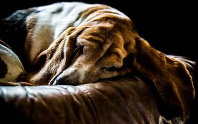 Behind the Magic – Photographing your pet