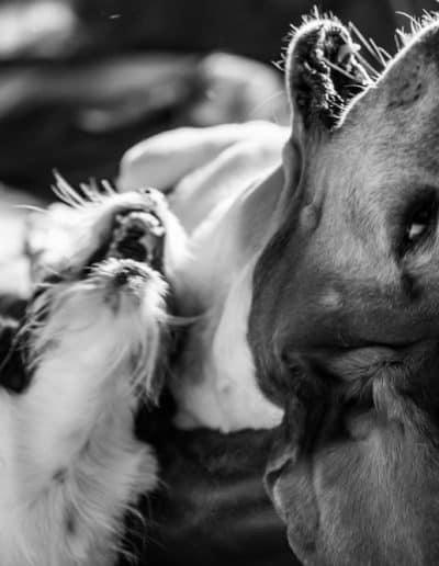 dog pet photographer devon somerset