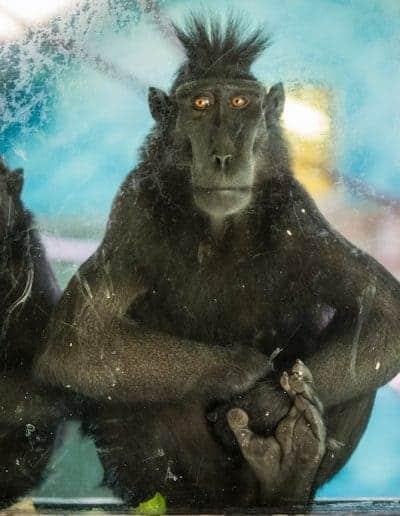 wildlife photographer jersey zoo
