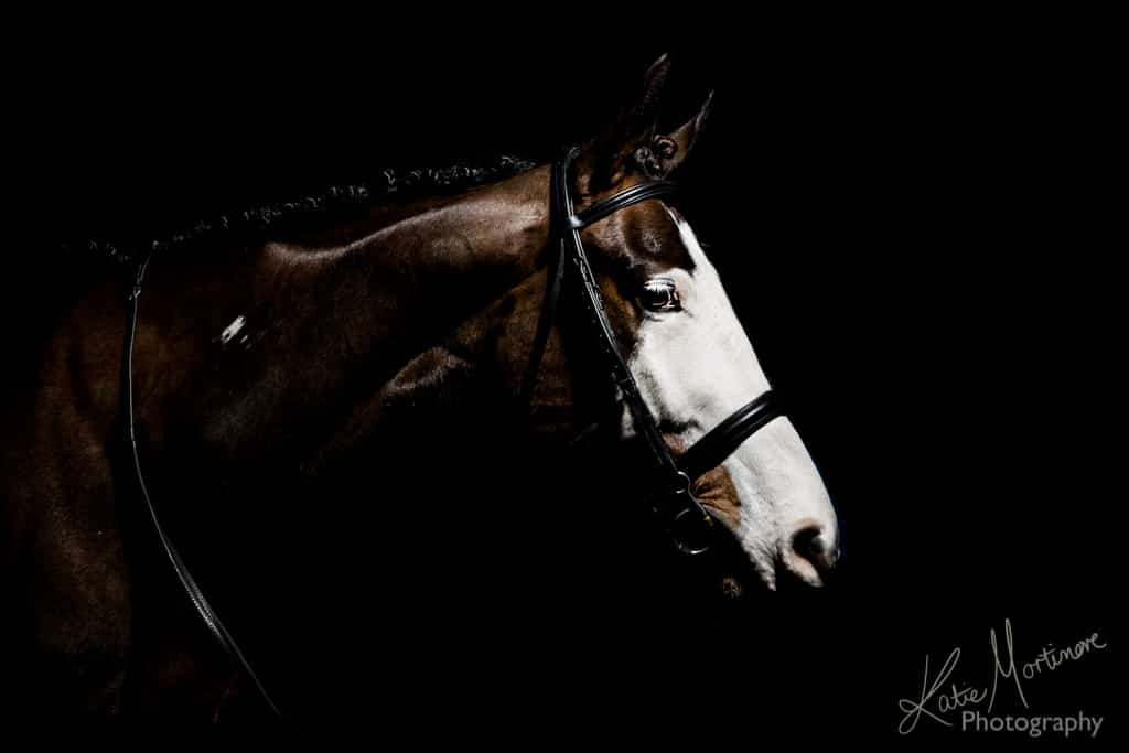 creating black background equine portraits