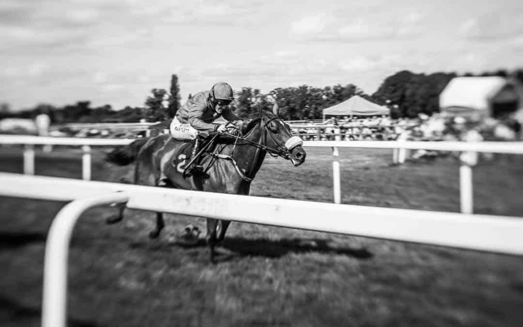 equine photographer race racehorse worcester racing