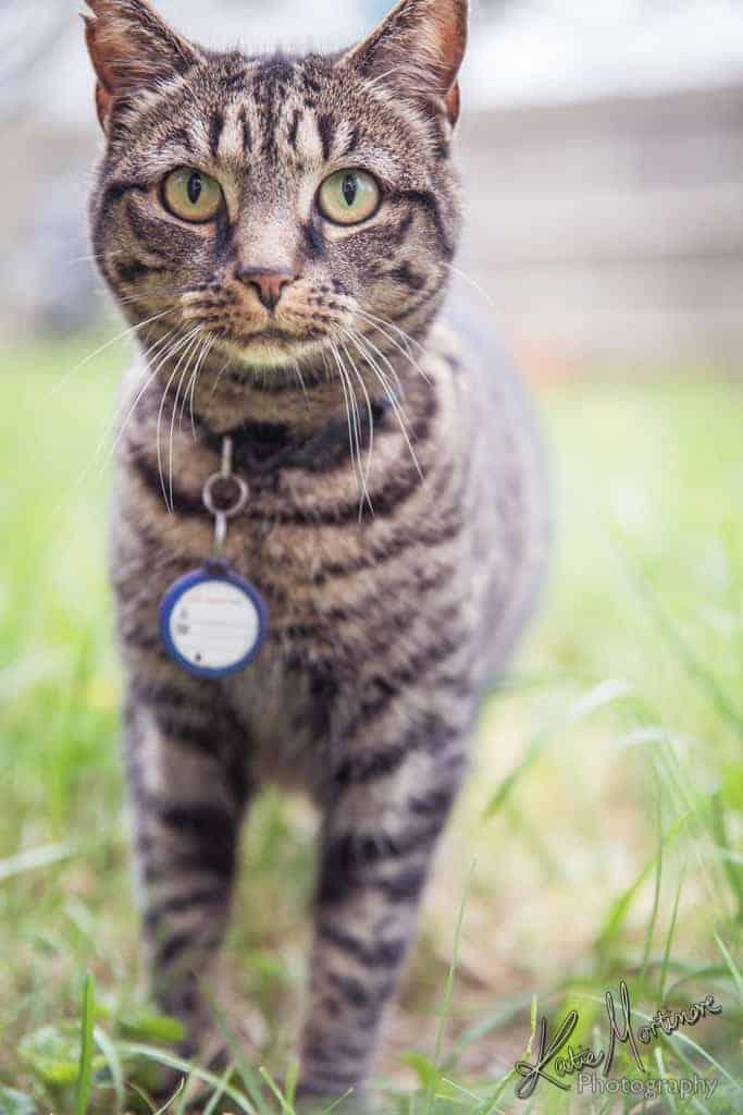 pet portrait photographer hampshire wiltshire
