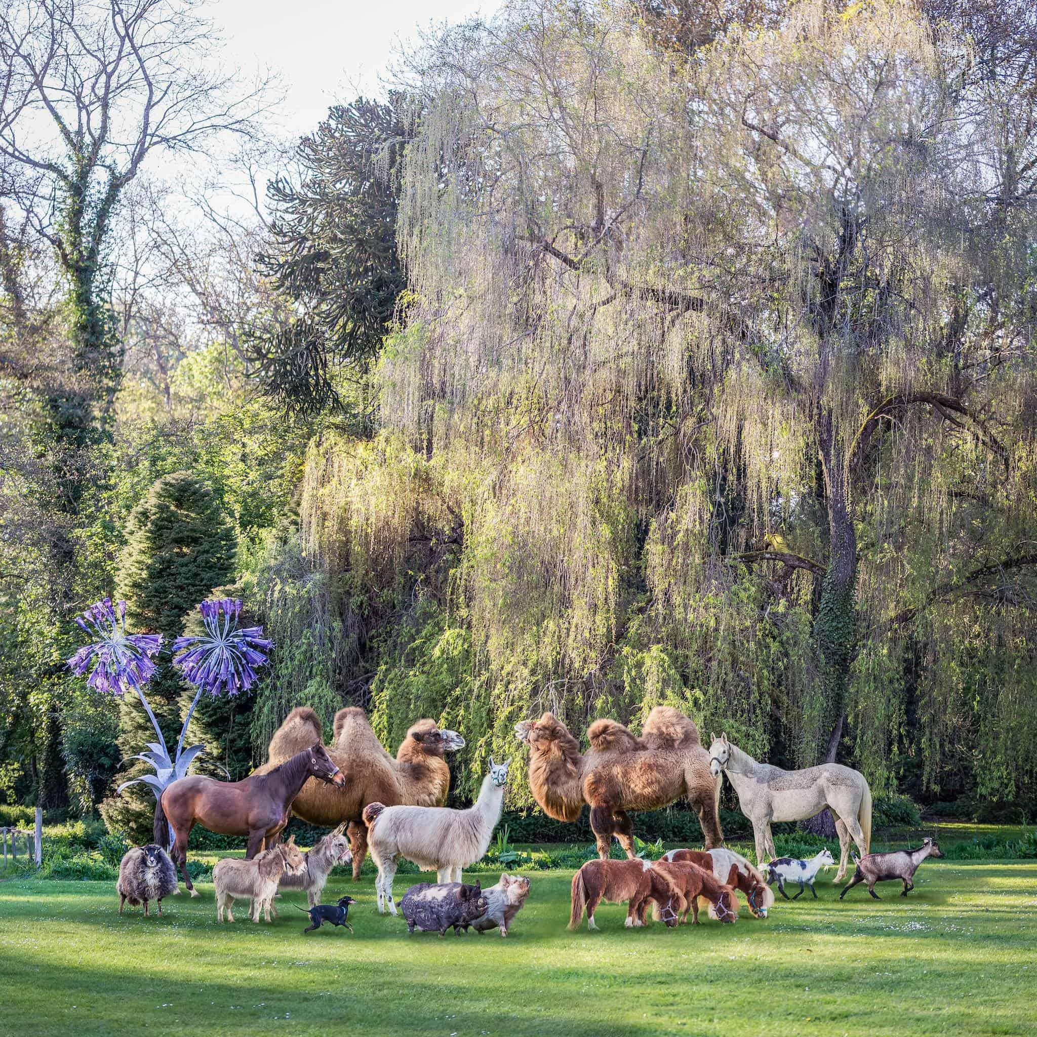 equine camel horse pig llama donkey sheep pig portrait zoo photographer