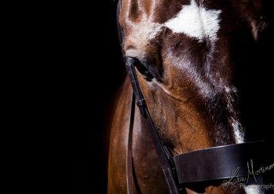equine photographer wiltshire hampshire somerset black background studio lit