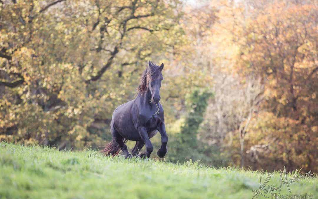 Behind the Magic – Enhancing an Autumnal image