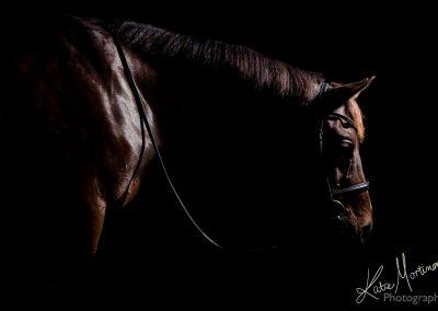 low key black background equine portrait