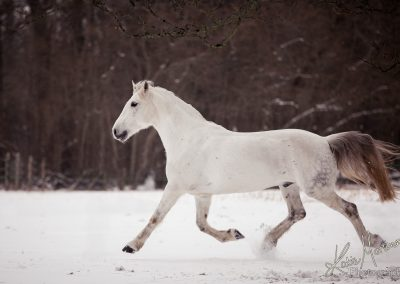 Photohop horse snow fencing gone