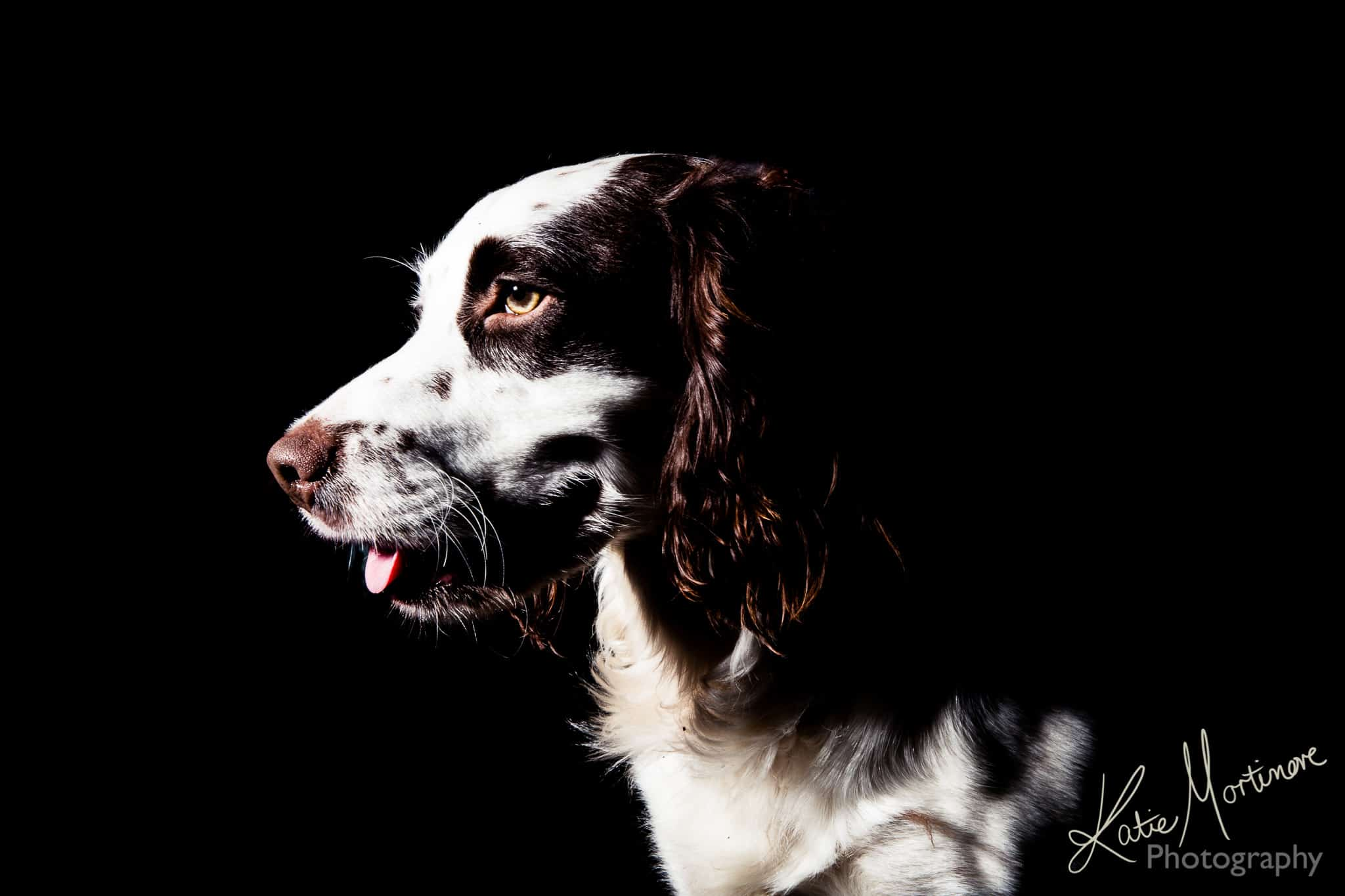 black background dog canine portrait