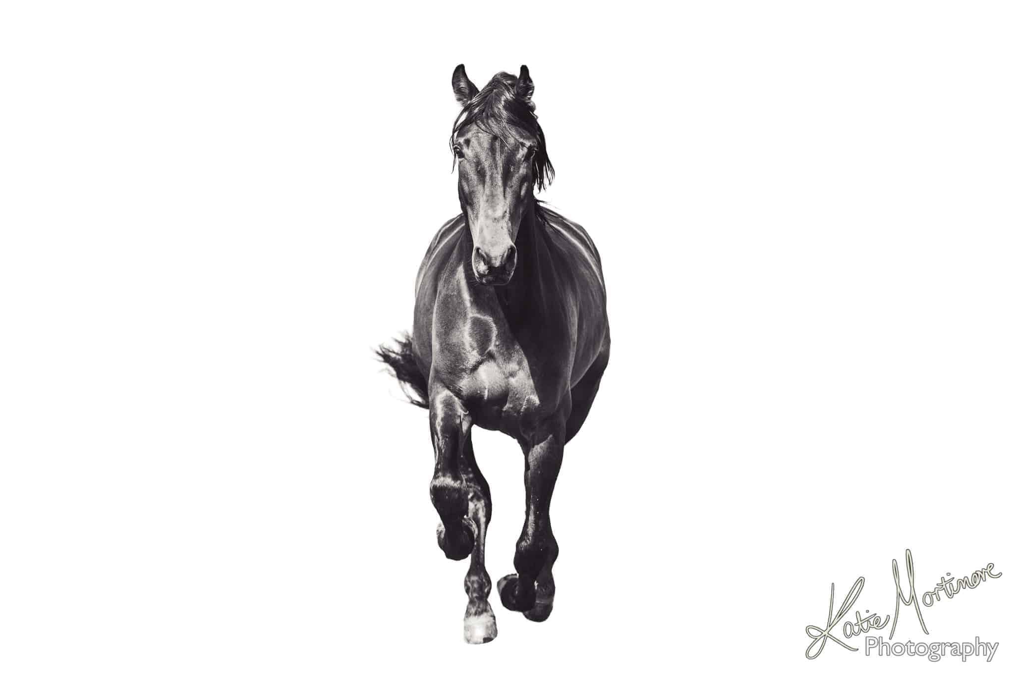 equine supermodel horse portrait photo shoot