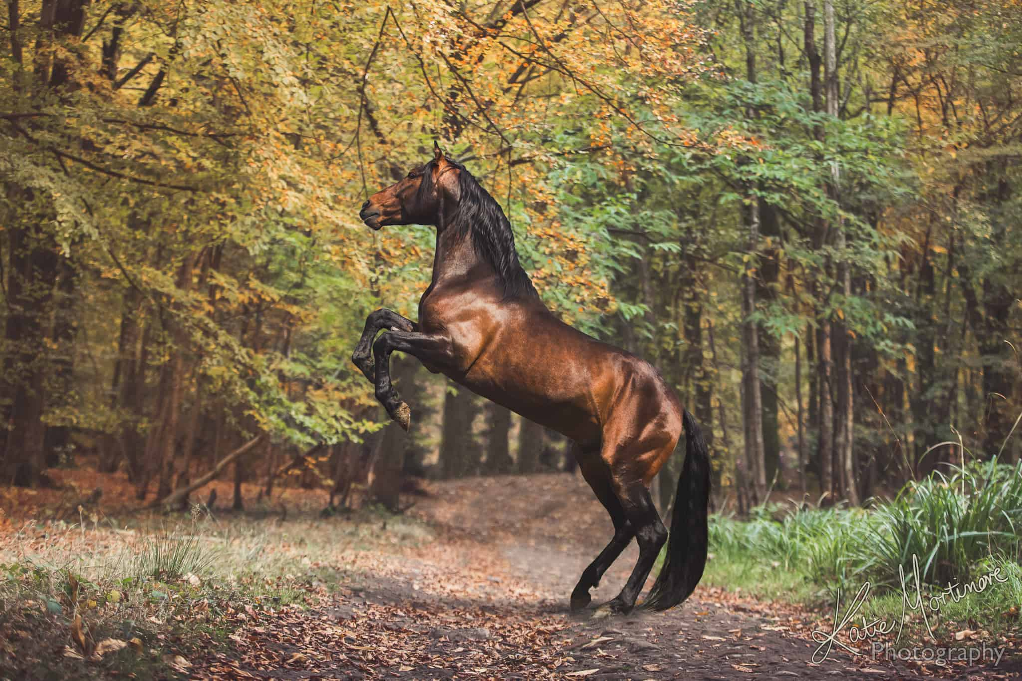 equestrian fine art prints katie mortimore photography