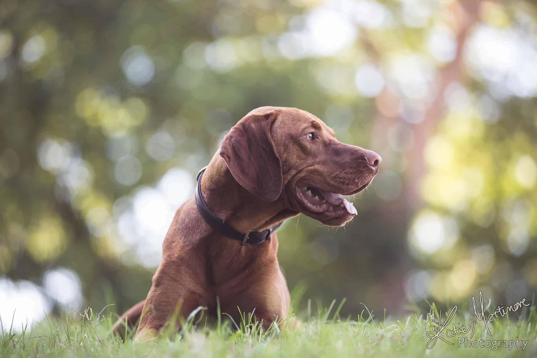 dog portrait wiltshire hampshire