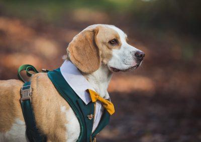tournerbury estate woodland outdoor wedding katie mortimore photography dog canine