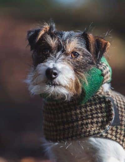 tournerbury estate woodland outdoor wedding katie mortimore photography dog canine terrier bowtie