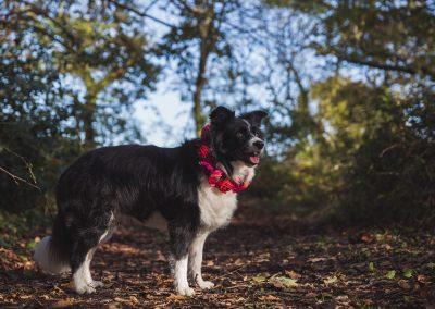 tournerbury-estate-woodland-wedding-katie-mortimore-photography-dog-canine