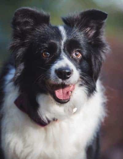 tournerbury estate woodland outdoor wedding katie mortimore photography dog canine collie