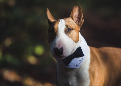 tournerbury estate woodland outdoor wedding katie mortimore photography dog canine