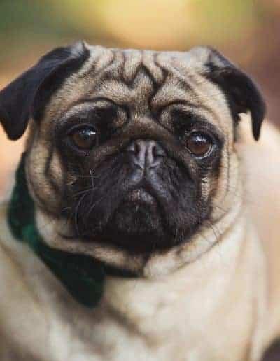 tournerbury estate woodland outdoor wedding katie mortimore photography dog canine pug