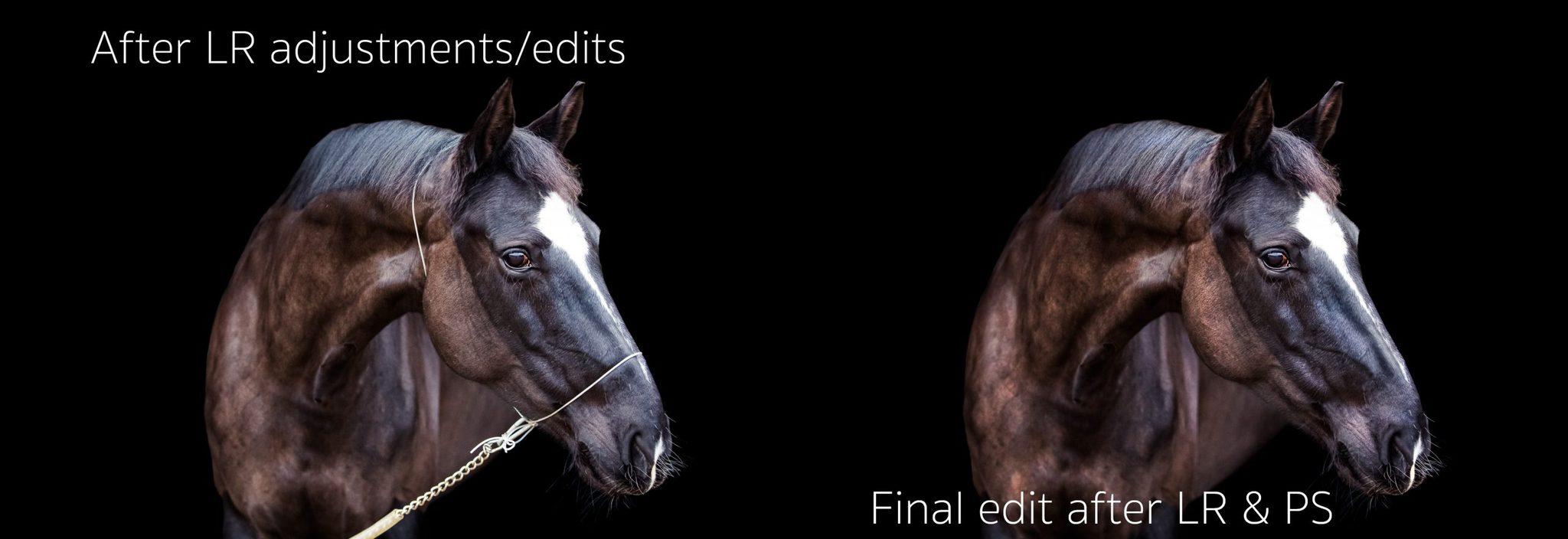 equine black background portrait editing process