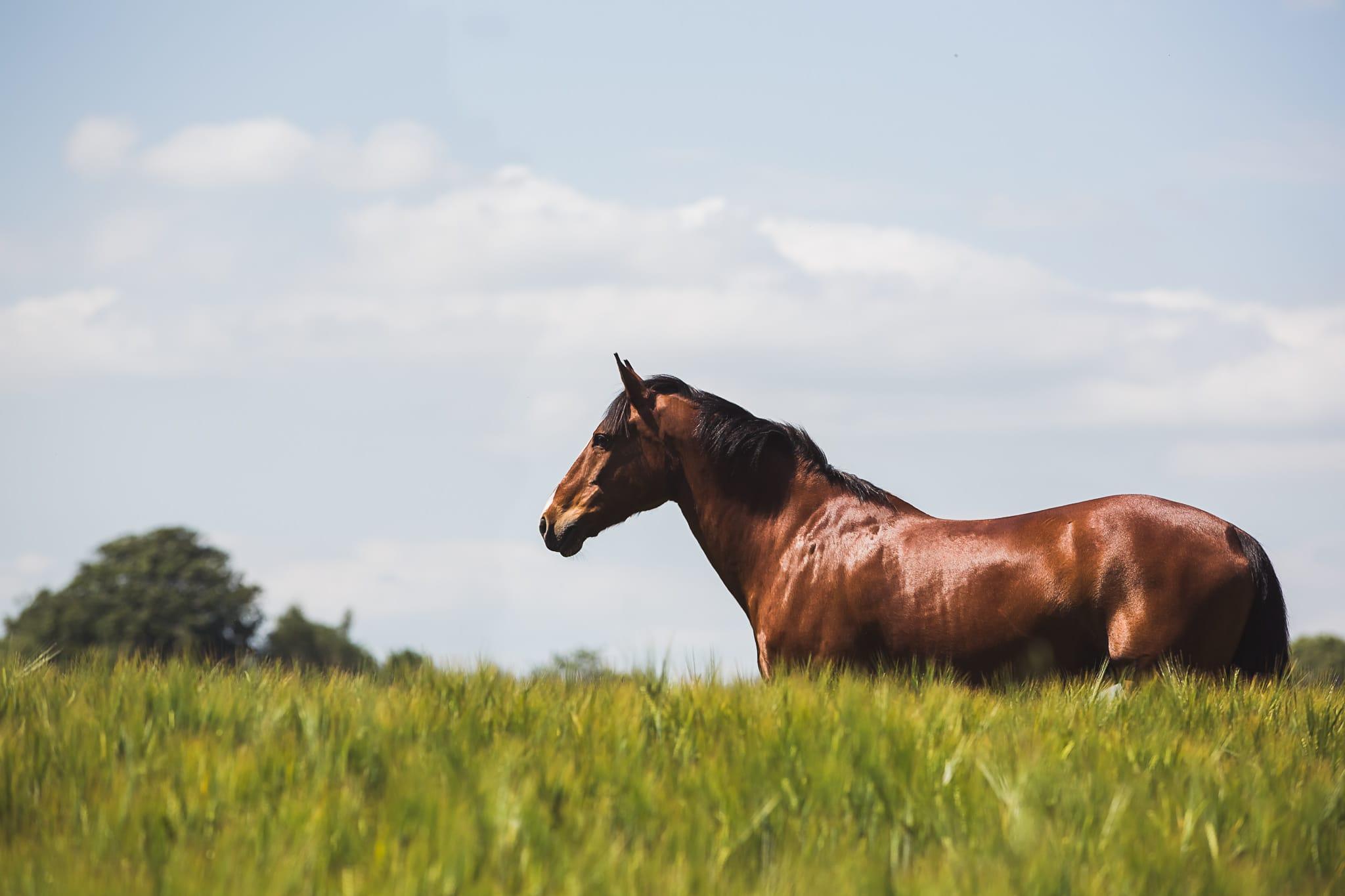 equine portrait spring summer horse equestrian hampshire wiltshire