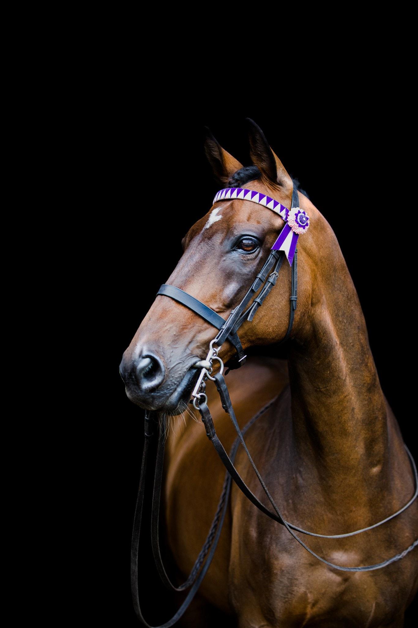 country horse autumnal portrait