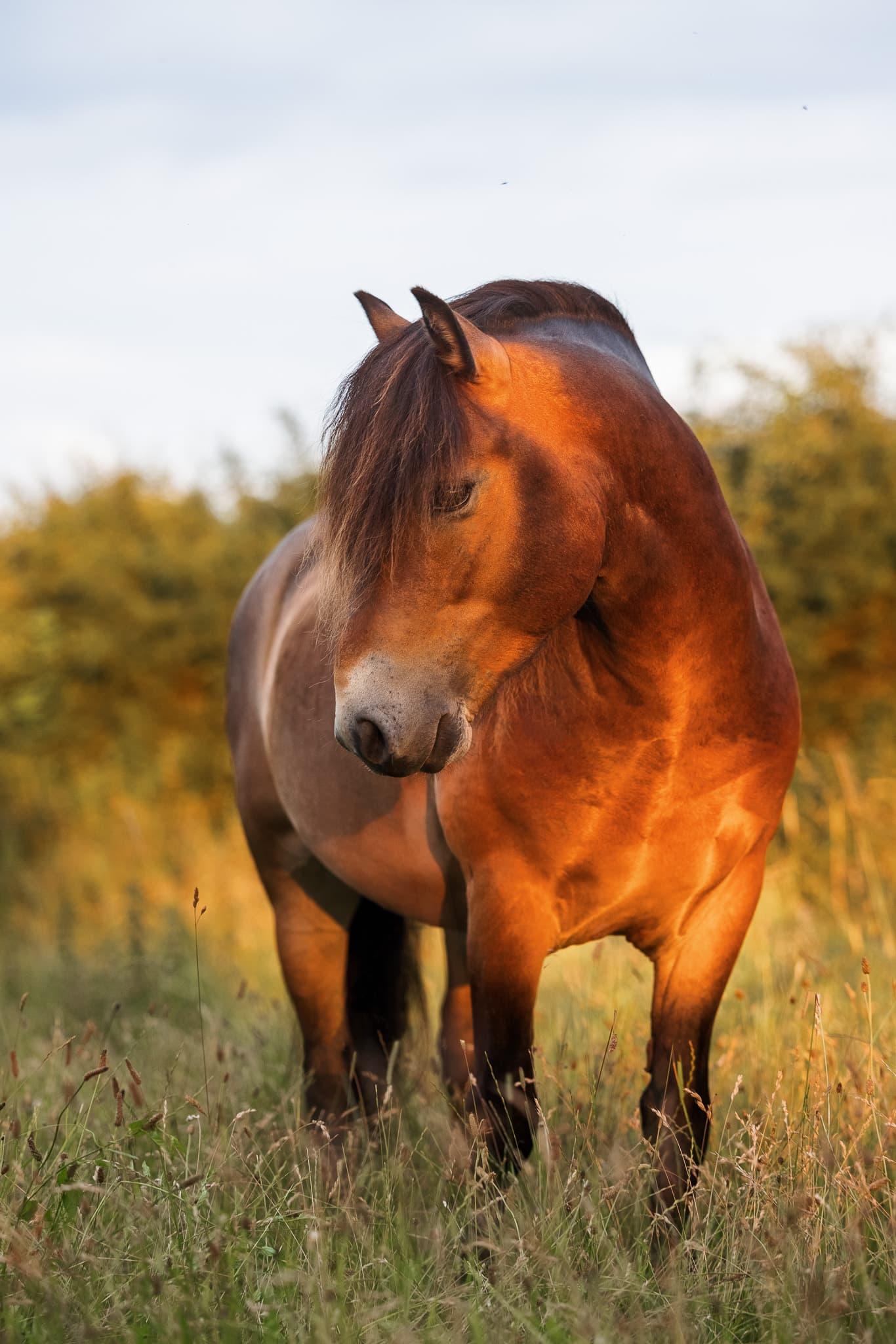 equine fine art portrait wiltshire